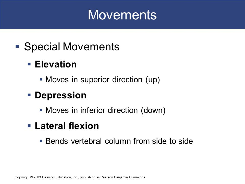Movements Special Movements Elevation Depression Lateral flexion