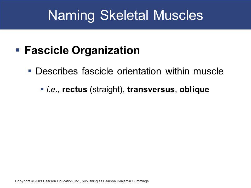 Naming Skeletal Muscles