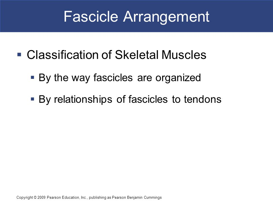 Fascicle Arrangement Classification of Skeletal Muscles