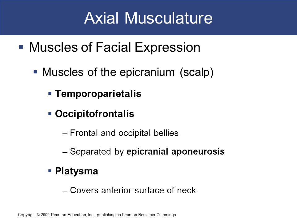 Axial Musculature Muscles of Facial Expression