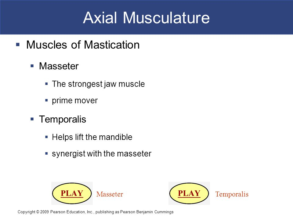 Axial Musculature Muscles of Mastication Masseter Temporalis