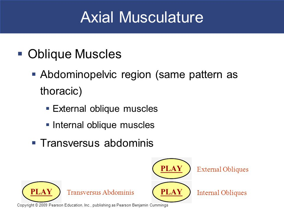 Axial Musculature Oblique Muscles