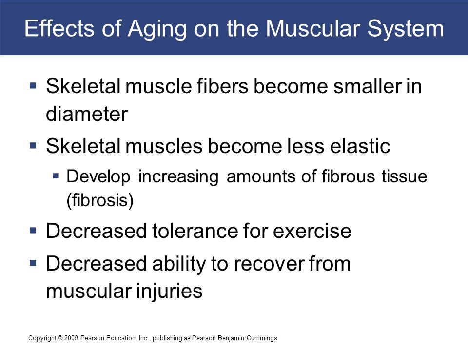 Effects of Aging on the Muscular System