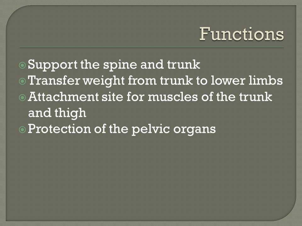 Functions Support the spine and trunk