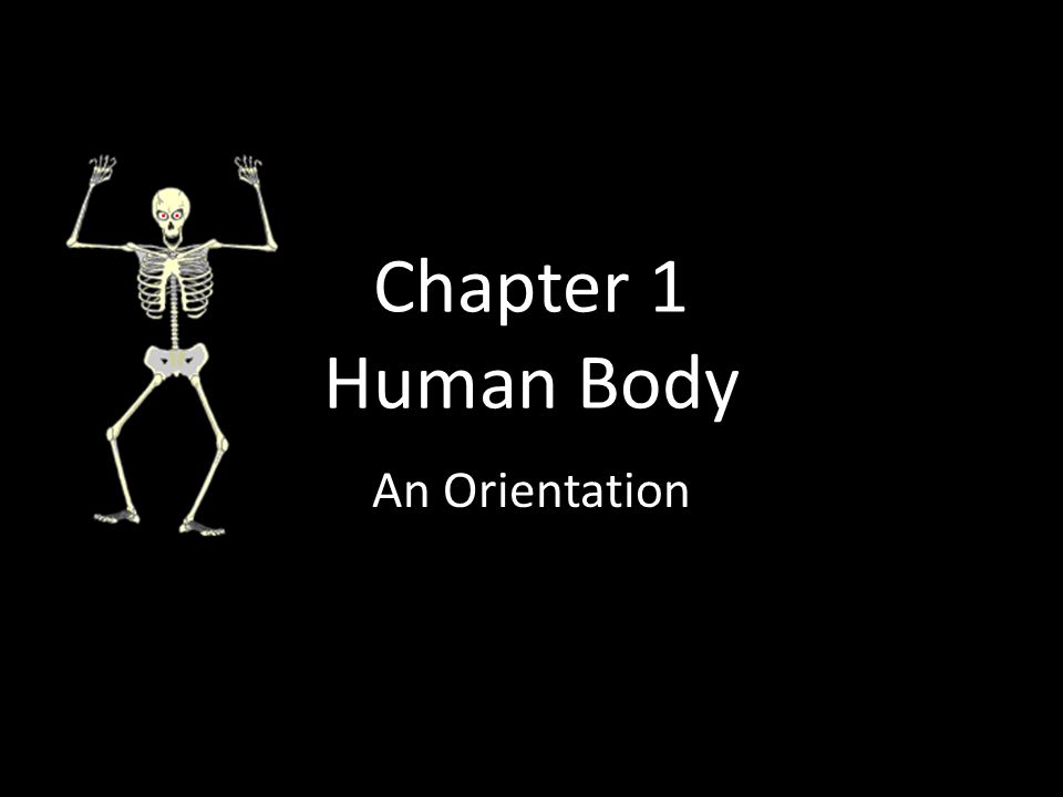 Chapter 1 Human Body An Orientation