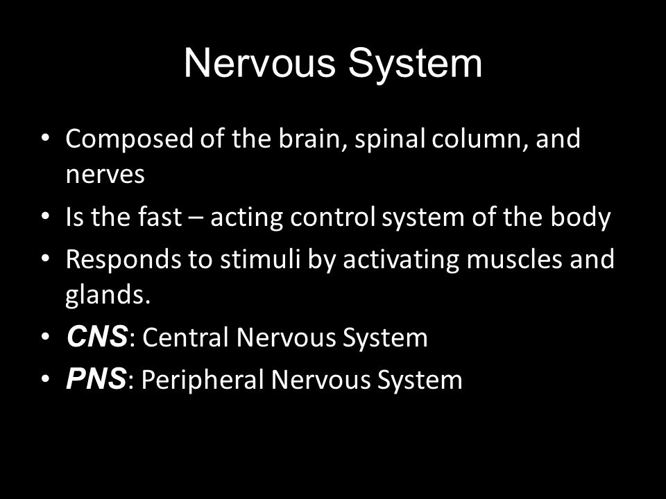 Nervous System Composed of the brain, spinal column, and nerves