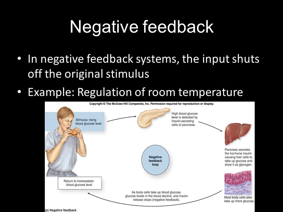 Negative feedback In negative feedback systems, the input shuts off the original stimulus.