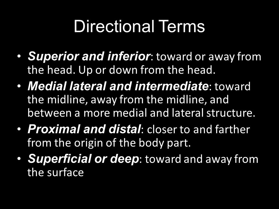 Directional Terms Superior and inferior: toward or away from the head. Up or down from the head.