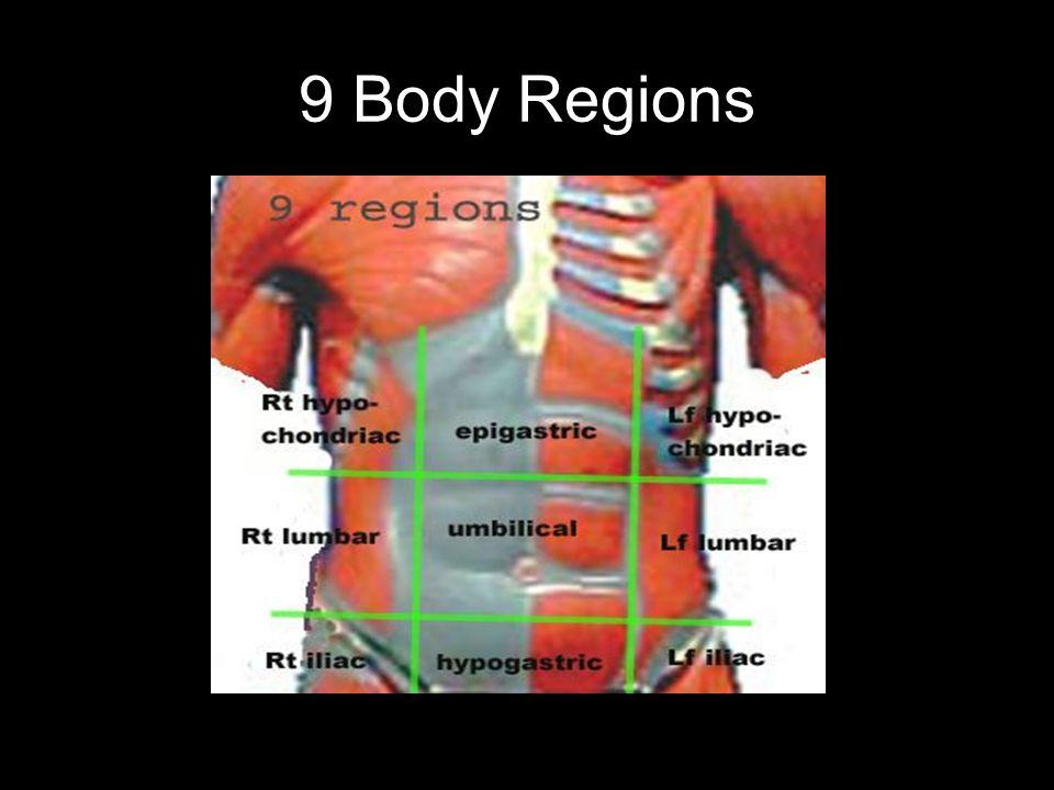 9 Body Regions