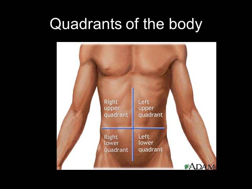 Quadrants of the body