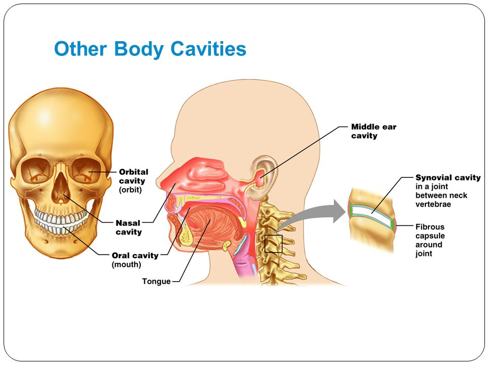 Other Body Cavities