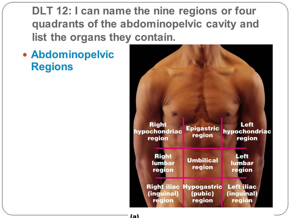 DLT 12: I can name the nine regions or four quadrants of the abdominopelvic cavity and list the organs they contain.