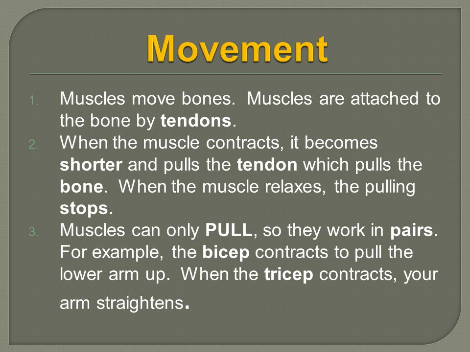 Movement Muscles move bones. Muscles are attached to the bone by tendons.