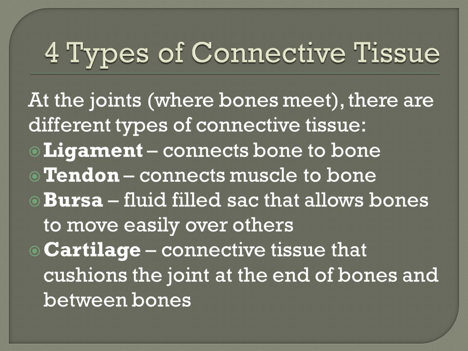 4 Types of Connective Tissue