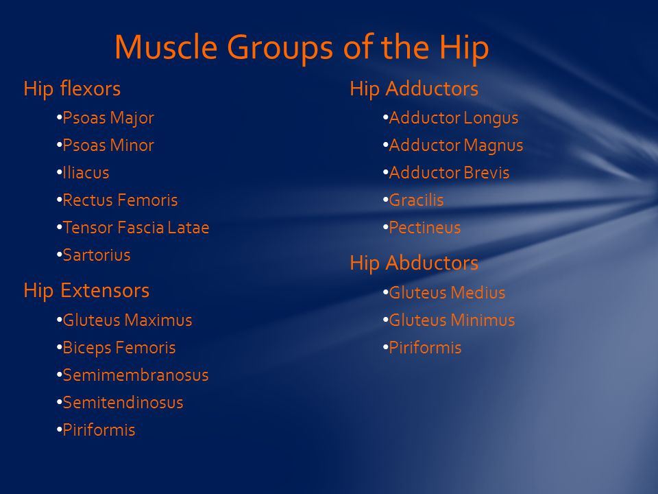 Muscle Groups of the Hip