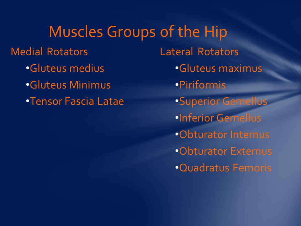 Muscles Groups of the Hip
