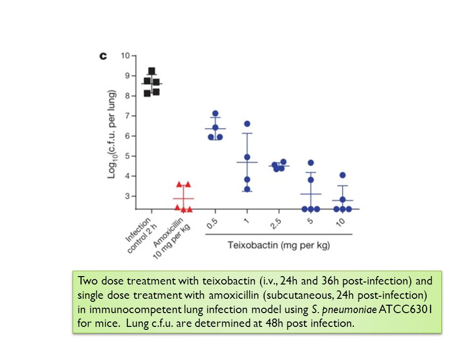 Two dose treatment with teixobactin (i. v