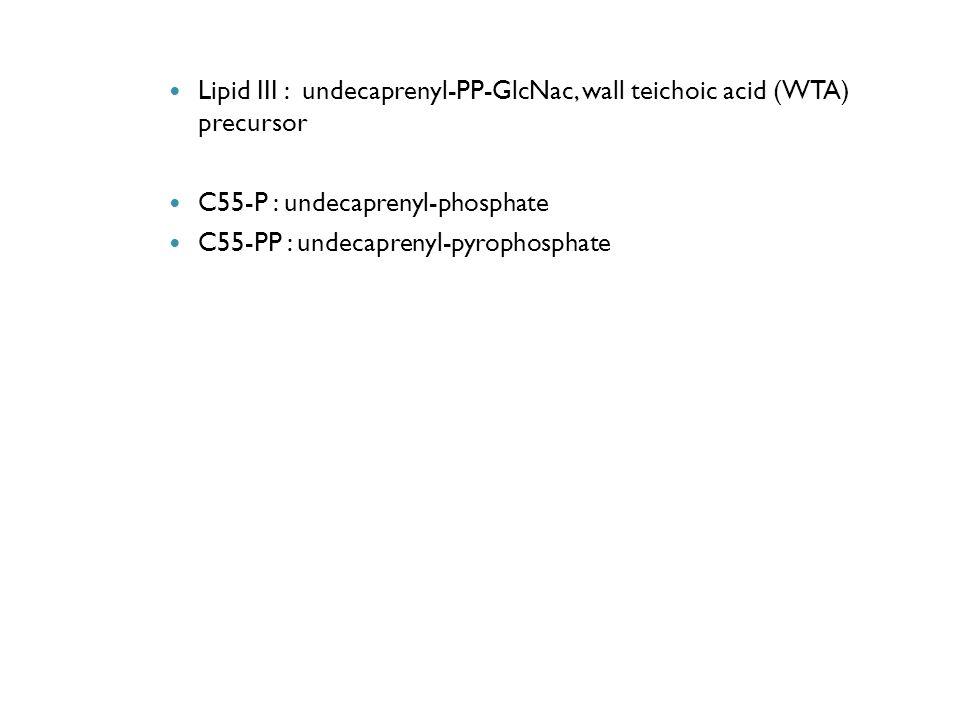 Lipid III : undecaprenyl-PP-GlcNac, wall teichoic acid (WTA) precursor