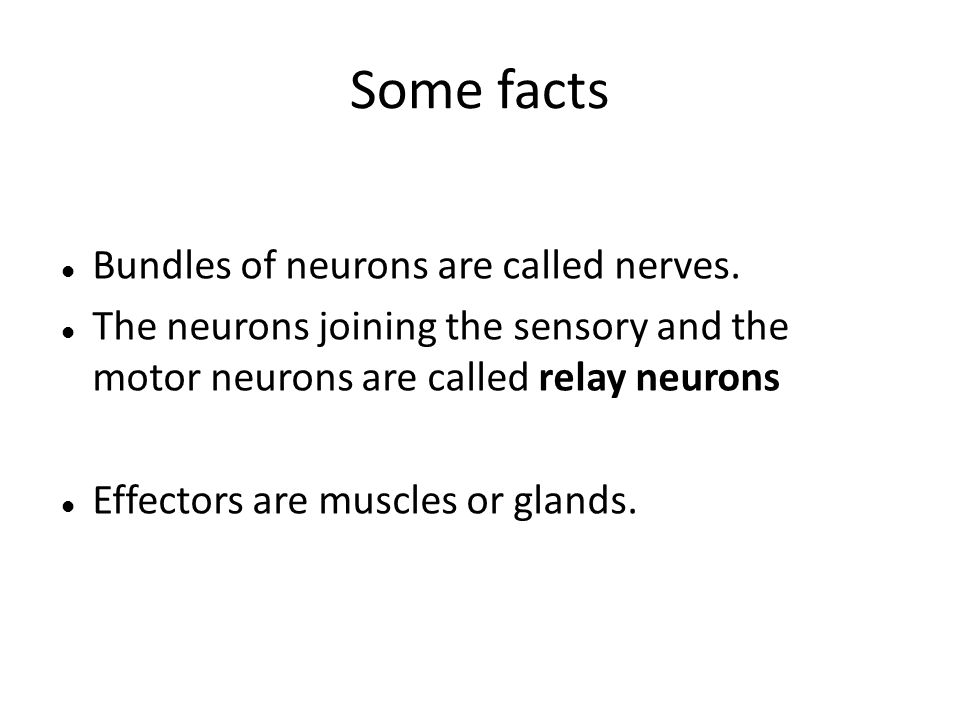 Some facts Bundles of neurons are called nerves.