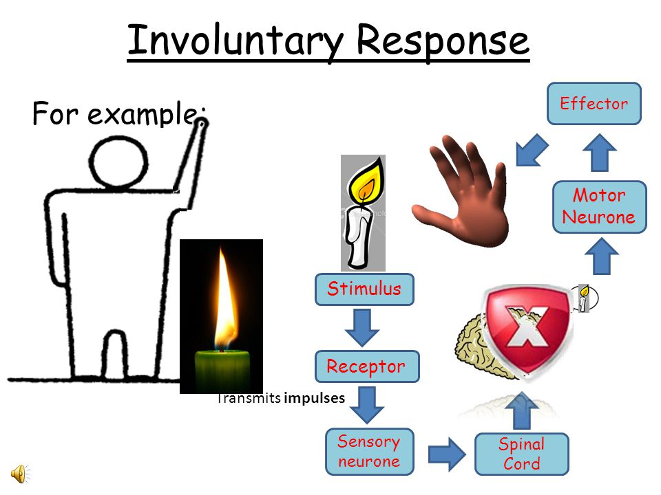 Involuntary Response For example; Motor Neurone Stimulus Receptor