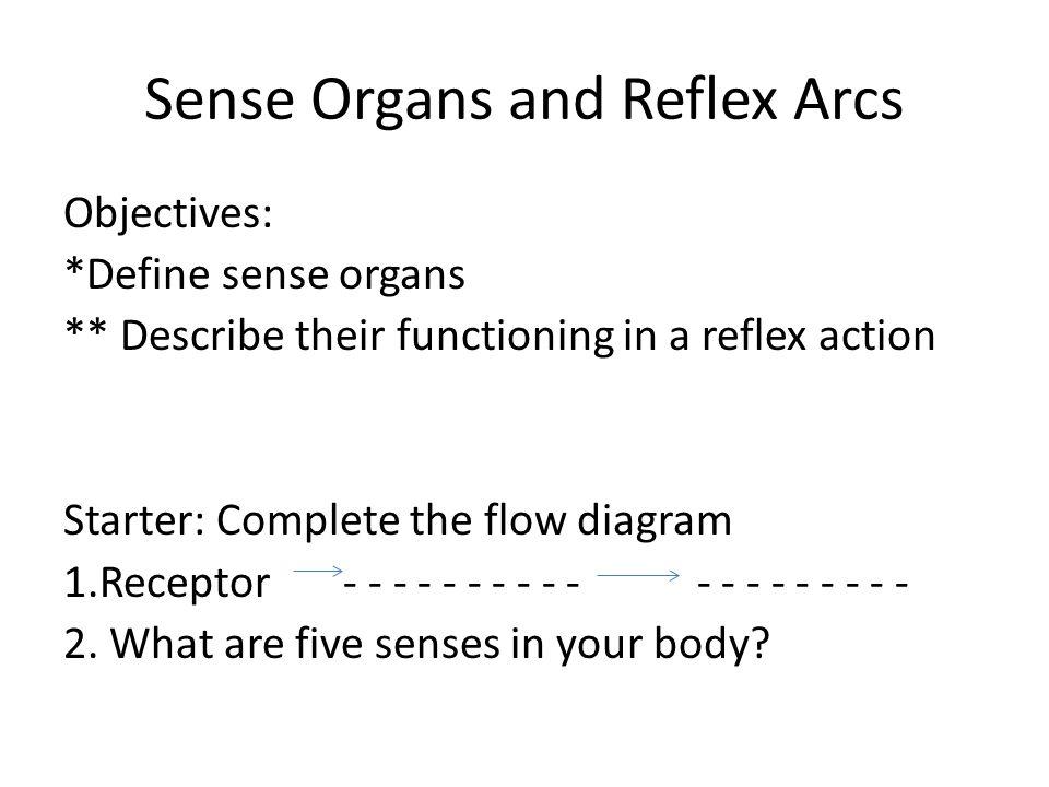 Sense Organs and Reflex Arcs