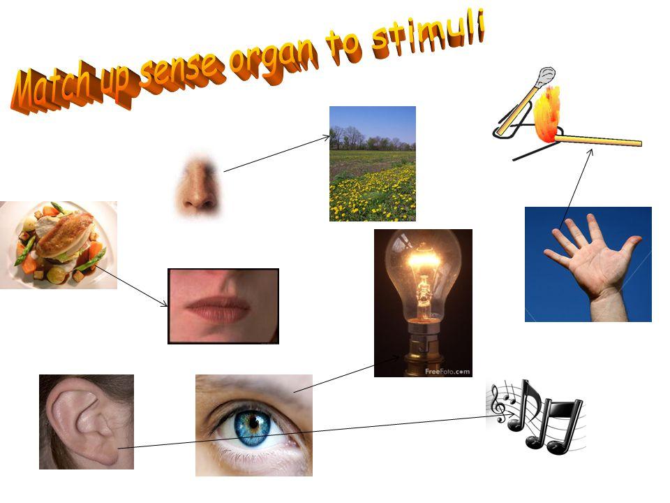 Match up sense organ to stimuli