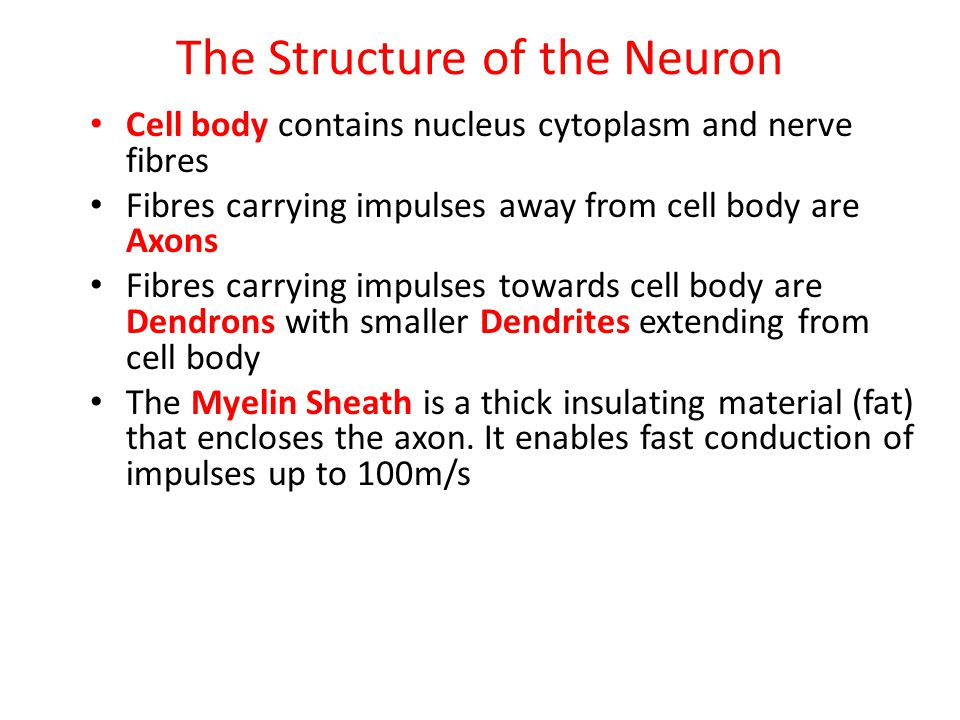 The Structure of the Neuron
