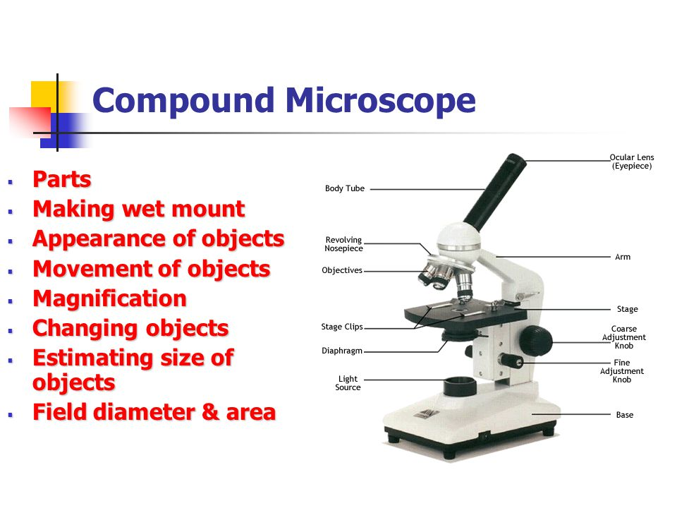 Compound Microscope Parts Making wet mount Appearance of objects