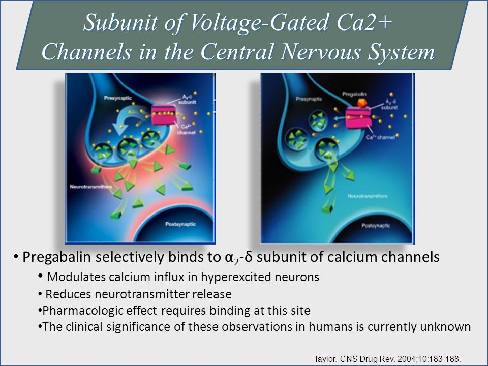 Subunit of Voltage-Gated Ca2+ Channels in the Central Nervous System