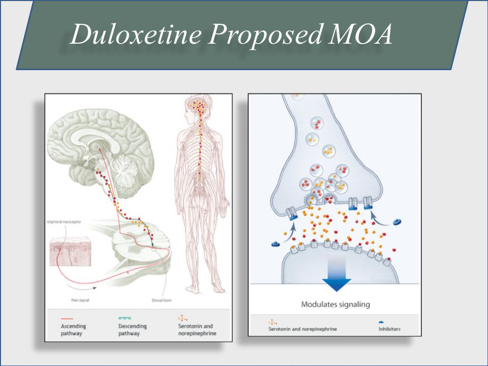 Duloxetine Proposed MOA