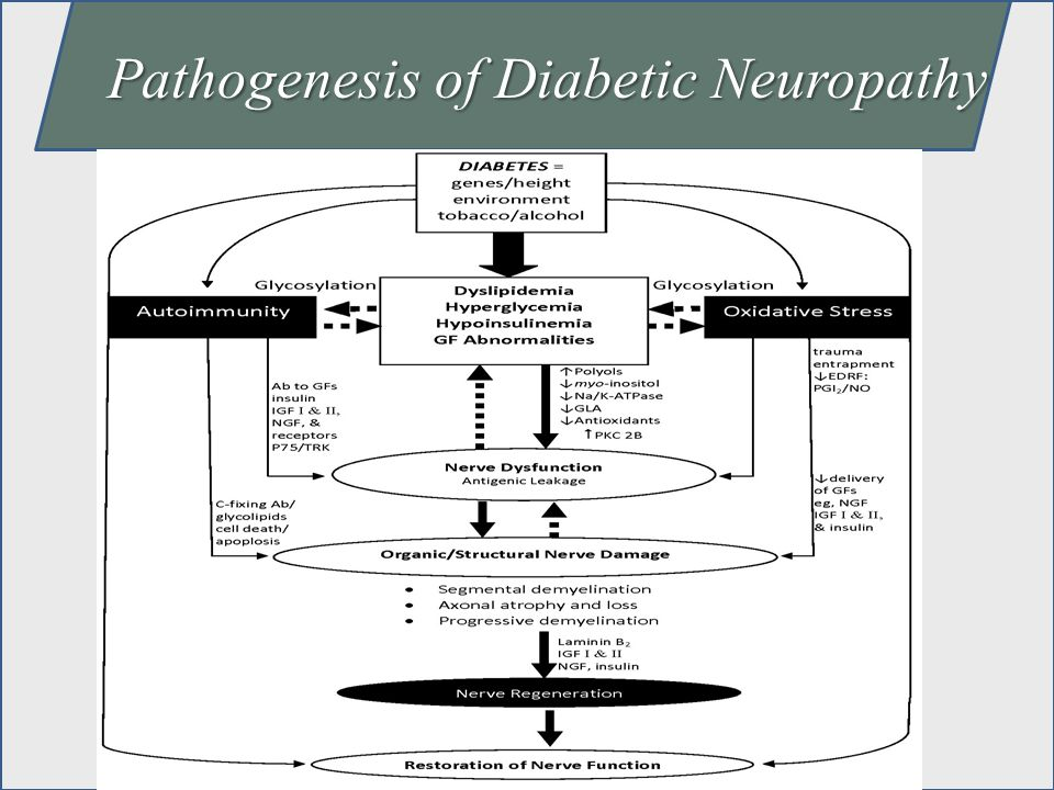 Pathogenesis of Diabetic Neuropathy