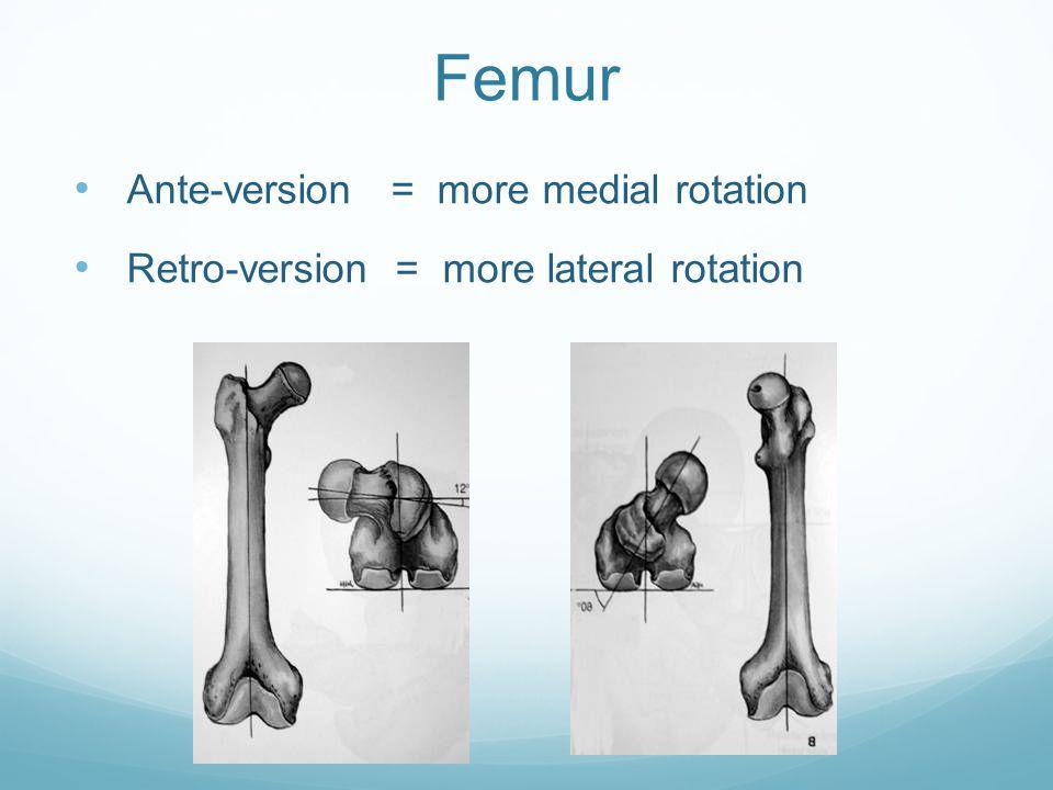 Femur Ante-version = more medial rotation