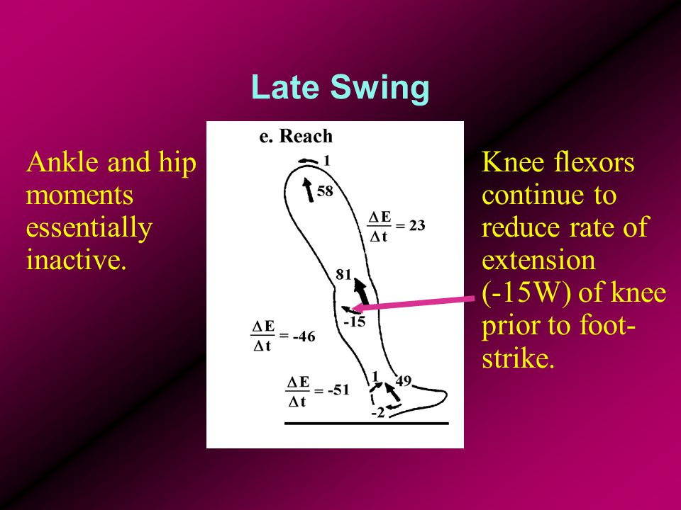 Late Swing Ankle and hip moments essentially inactive.