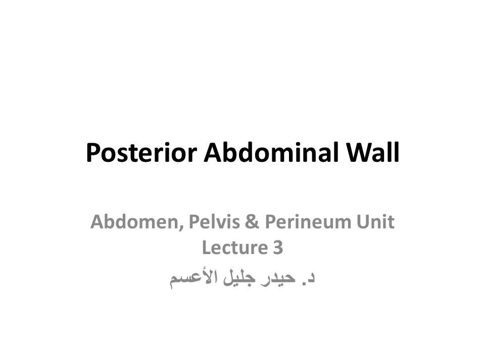Posterior Abdominal Wall