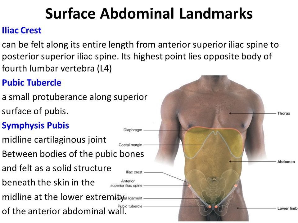 Surface Abdominal Landmarks