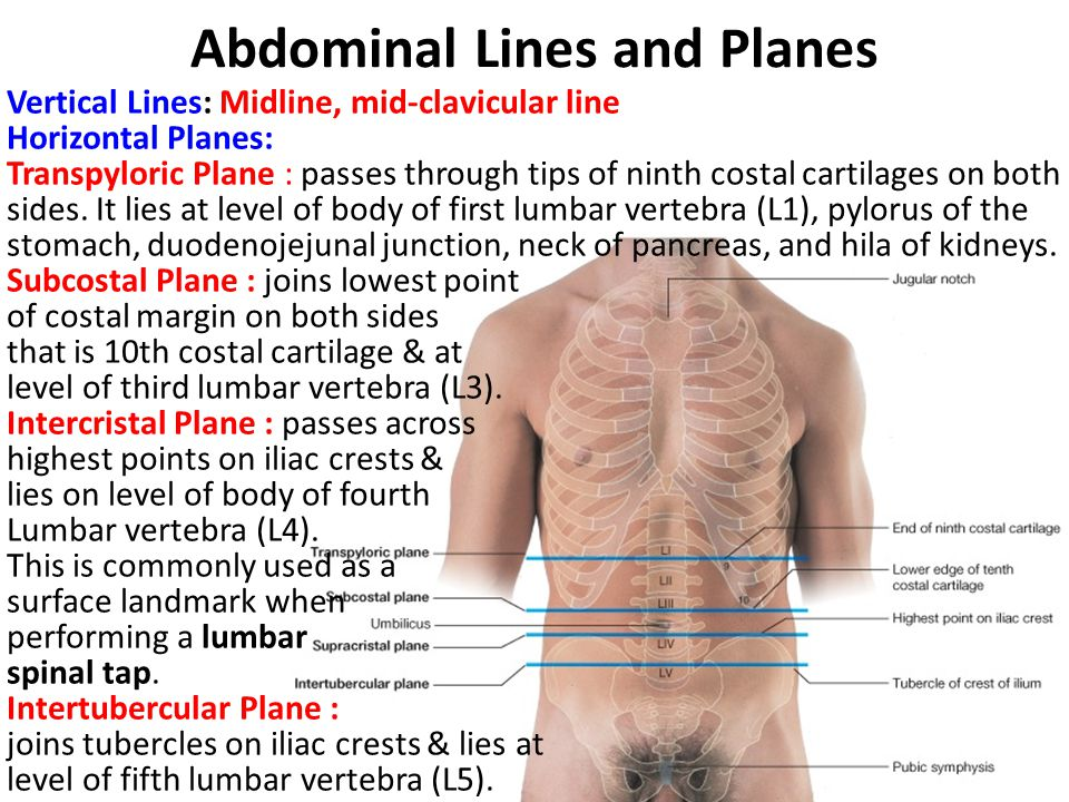 Abdominal Lines and Planes