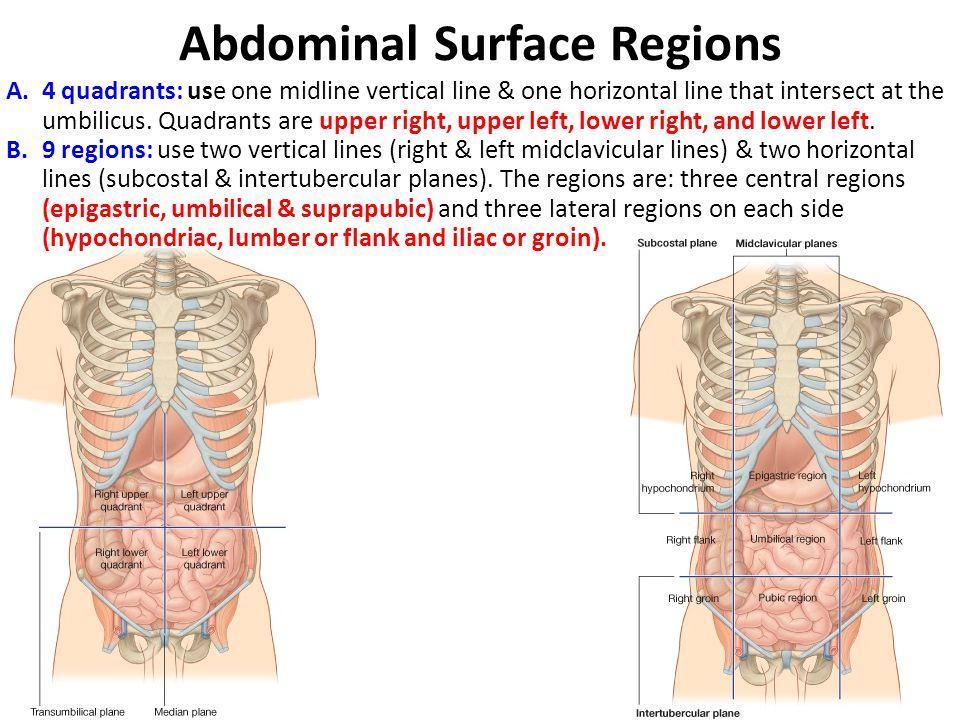 Abdominal Surface Regions