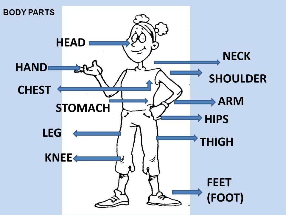 HEAD NECK HAND SHOULDER CHEST ARM STOMACH HIPS LEG THIGH KNEE