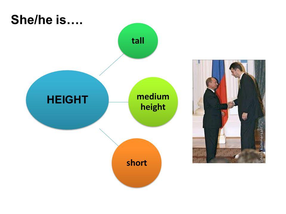 She/he is…. tall medium height short HEIGHT