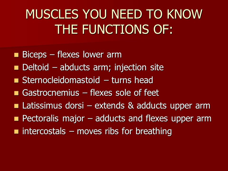 MUSCLES YOU NEED TO KNOW THE FUNCTIONS OF: