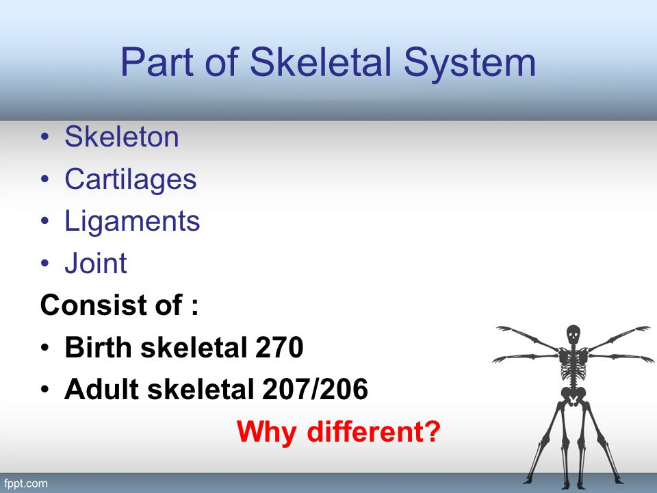 Part of Skeletal System
