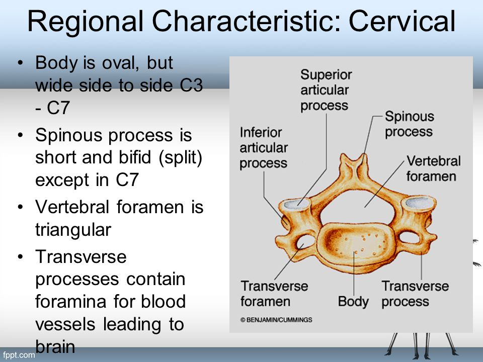 Regional Characteristic: Cervical