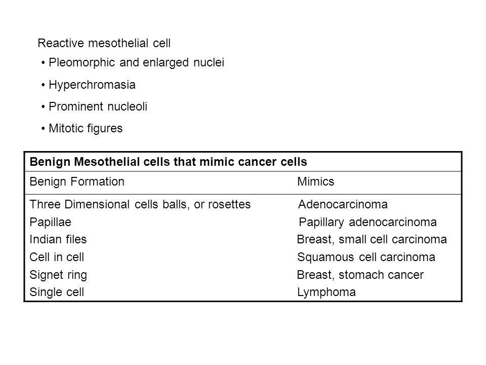 Reactive mesothelial cell
