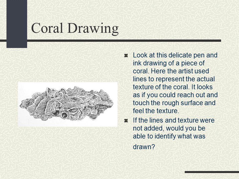 Coral Drawing