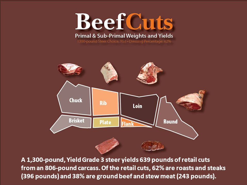 A 1,300-pound, Yield Grade 3 steer yields 639 pounds of retail cuts from an 806-pound carcass.