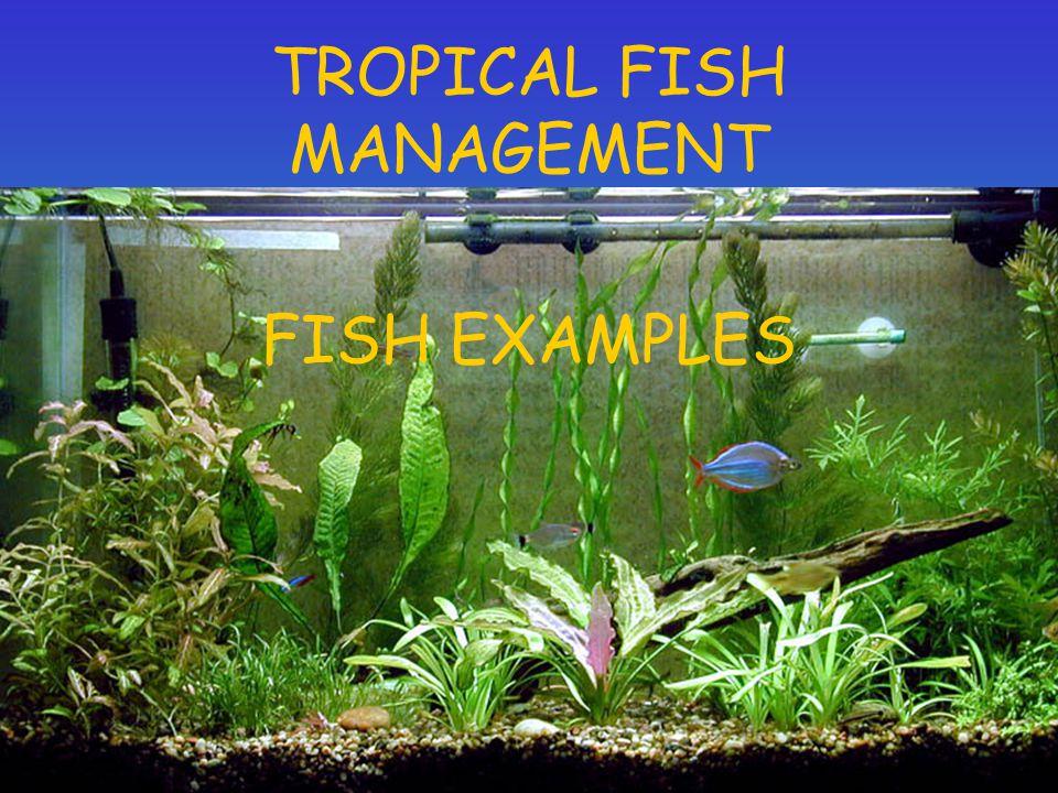 TROPICAL FISH MANAGEMENT
