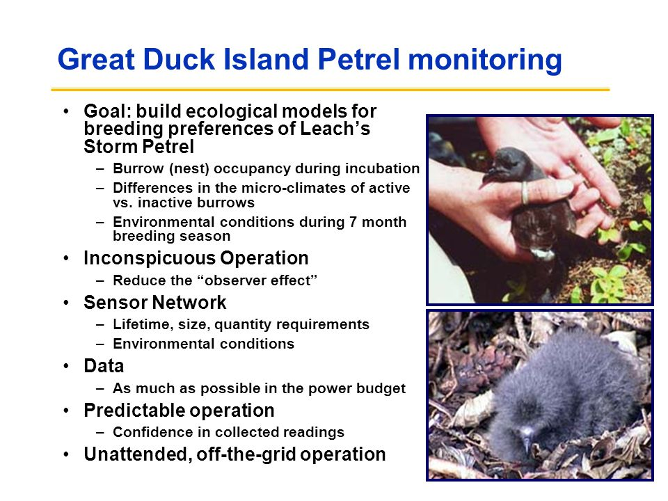 Great Duck Island Petrel monitoring