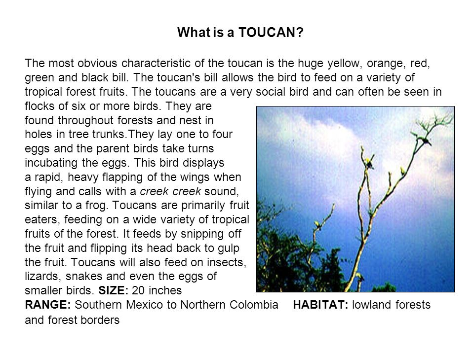 What is a TOUCAN.