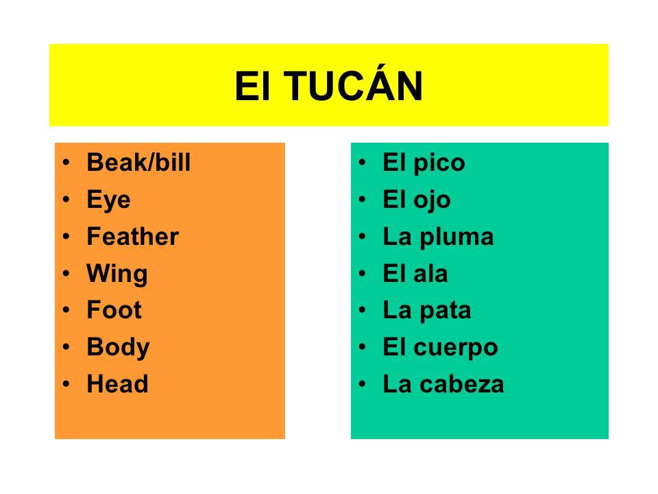 El TUCÁN Beak/bill Eye Feather Wing Foot Body Head El pico El ojo