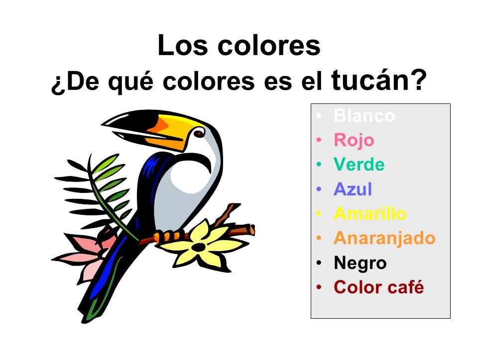Los colores ¿De qué colores es el tucán